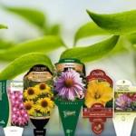 Etiquetas p/ Plantas,  Mudas e Frutas